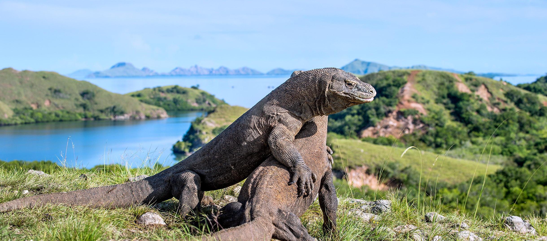 Labuan Bajo Trips to Komodo