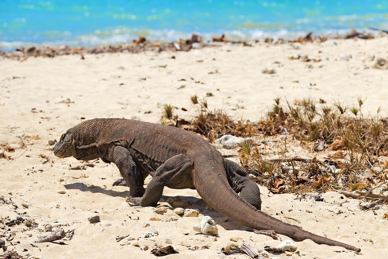 Wisata Labuan Bajo Pulau Komodo